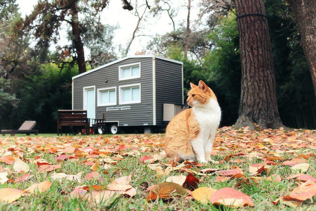 tiny house rodizio